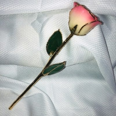 White Pink Rose With Gold Trim