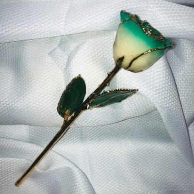 Turquoise Edge White Rose With Gold Trim