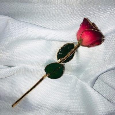 Pink Burgandy Rose With Gold Trim