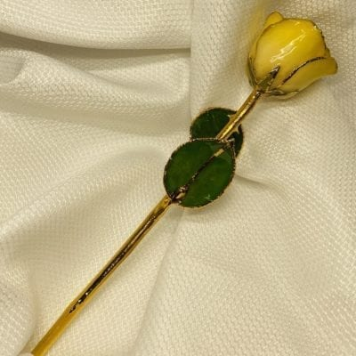 Yellow Edge White Rose with Gold Trim